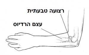 רצועה טבעתית